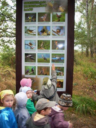 Tablica dydaktyczna - Skrzydlaci Mieszkańcy Lasu